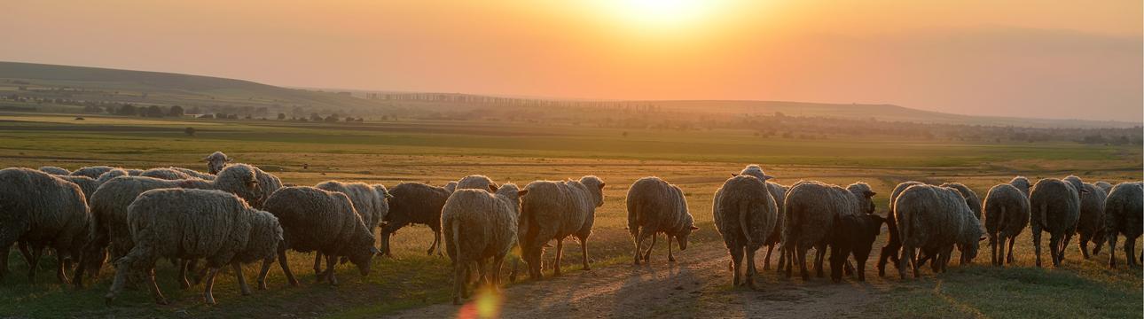 kithairon-farms_1290x360_F6